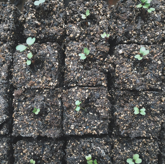 Seed Starting in Small Spaces