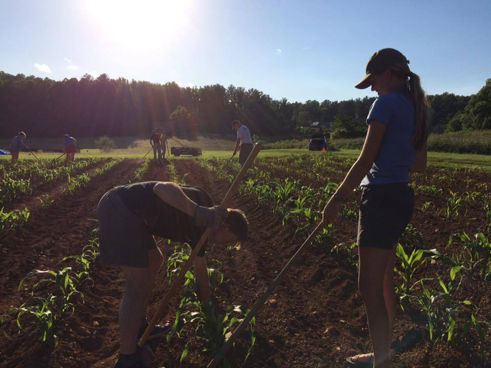 Volunteer at a Community Garden