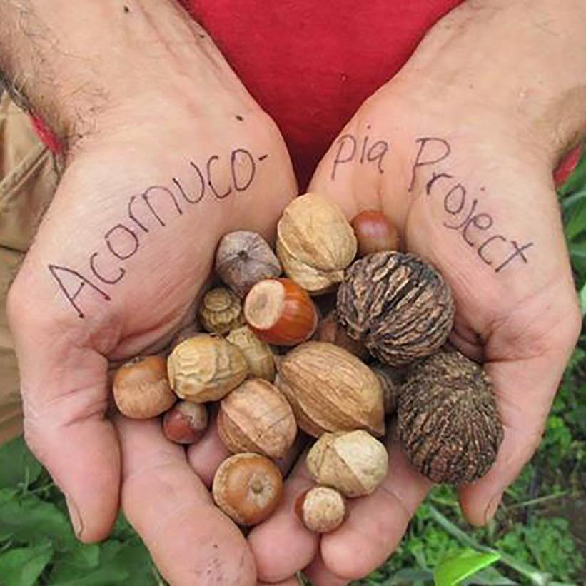 09.16.18 // What's Nuts?  Tree ID and Foraging with Tom Celona // 5:30-7:30pm