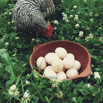 08.12.18 // Backyard Poultry with Frances Tacy // 5:30-7:30pm
