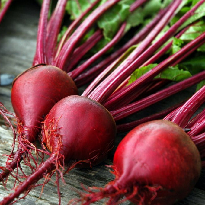 Early Detroit Red Beet 4-pack plant start