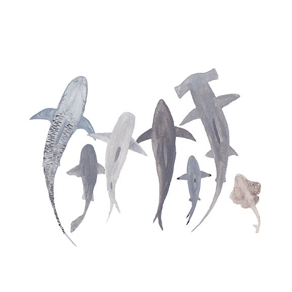 Study of Sharks<br>Archival Watercolor Print - Mari Orr  - 2