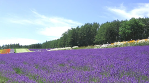 the benefits of lavender in our products