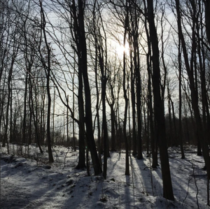 a beautiful winter walk in the Catskills