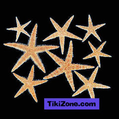 Genuine Starfish Assortment (30)