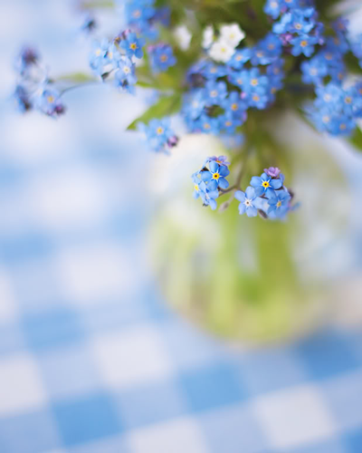 mothers-day-flowers-simple-arrangements-forget-me-not