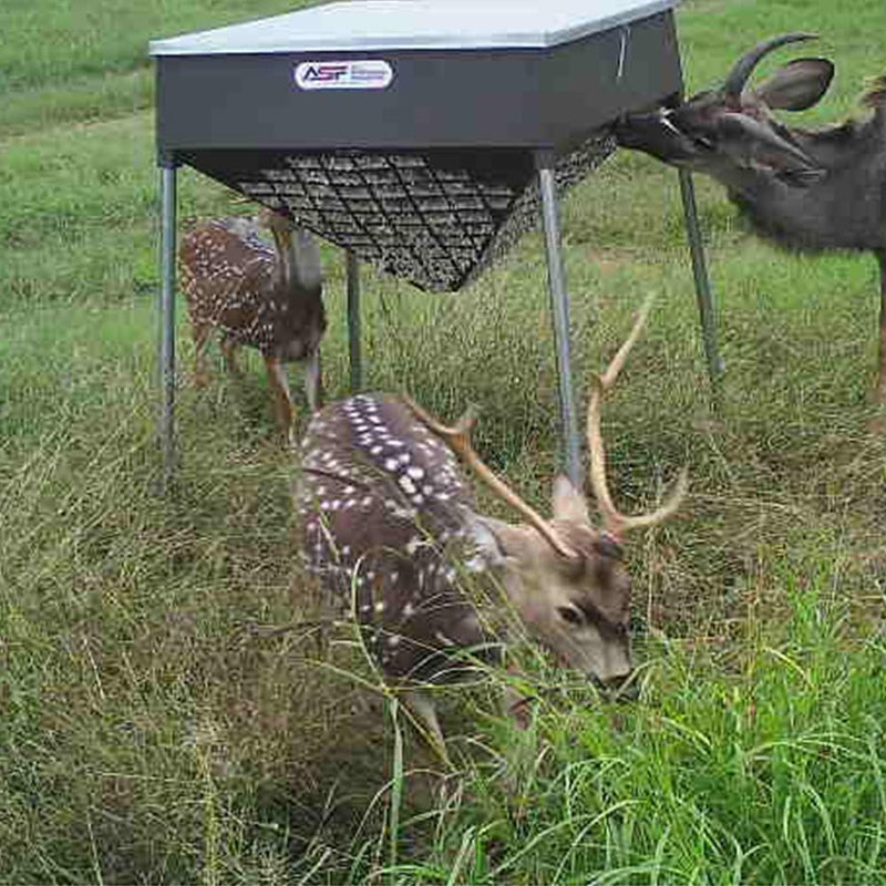 Protein Deer Feeders Texas | Automatic Protein Deer Feeders