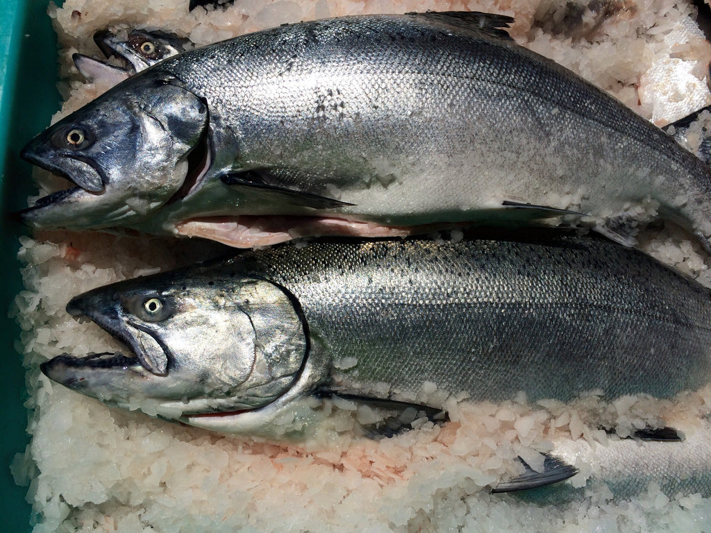 Wild Oregon Chinook Salmon