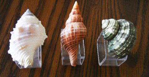 GORGEOUS AND UNIQUE VINTAGE SEA SHELL NAPKIN RINGS NAPKIN HOLDERS