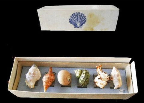 VINTAGE SEA SHELL NAPKIN RINGS NAPKIN HOLDERS