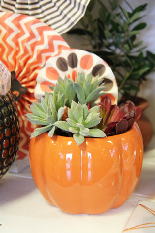Pumpkin Planter with air plant