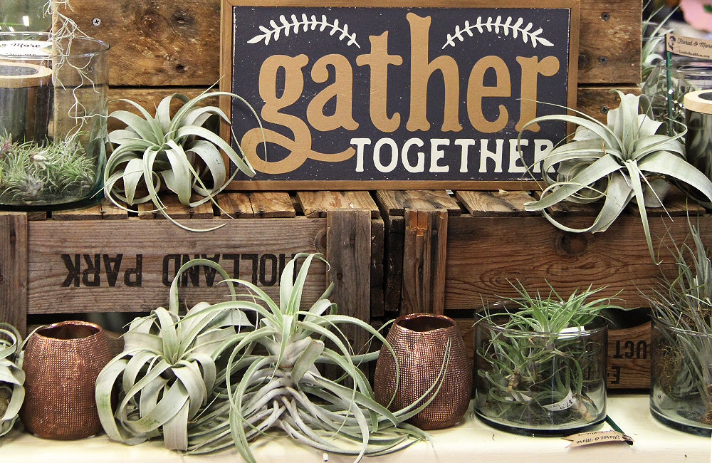 Display of air plants and Gather Together sign
