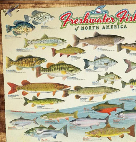 "Puzzle, ""Freshwater Fish of North America"""
