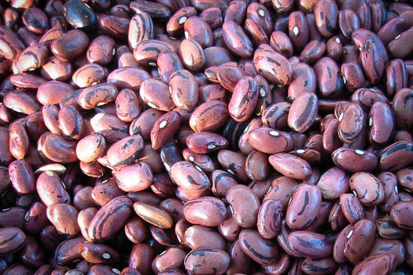 Rio Zape bean - Rancho Gordo, Heirloom beans