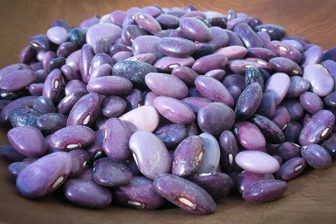 Ayocote Morado, a purple medium size bean-Rancho Gordo, Heirloom beans.