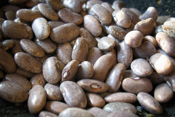 Rebosero, a small light brown bean - Rancho Gordo, Heirloom beans