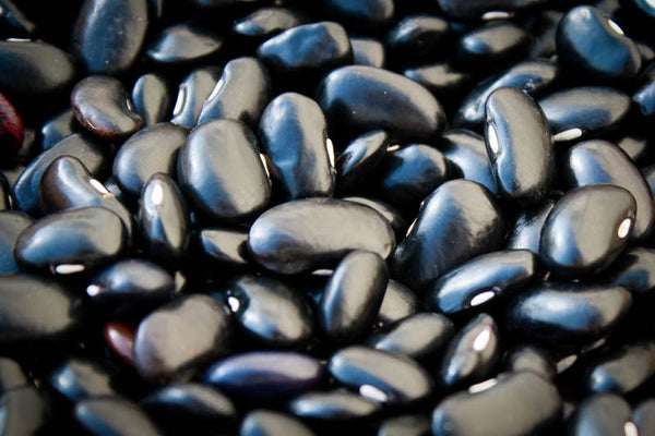 Ayocote Negro, a medium size black bean-Rancho Gordo, Heirloom beans.