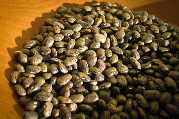 Moro bean - Rancho Gordo, Heirloom beans