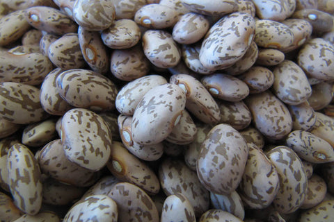 Pinto Bean , Heirloom Bean - Rancho Gordo,   - 3