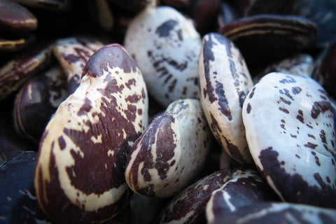 Christmas Lima Bean , Heirloom Bean - Rancho Gordo, Rancho Gordo  - 3