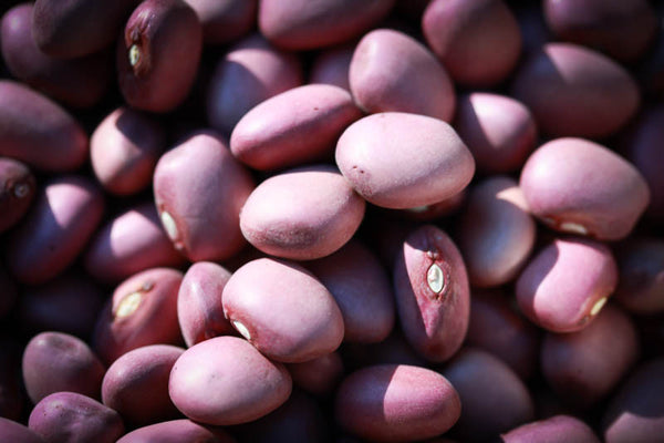 Lila Bean , Heirloom Bean - Rancho Gordo, Rancho Gordo  - 1