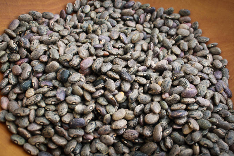 Moro, a small brown bean with black marketings - Rancho Gordo, Heirloom beans