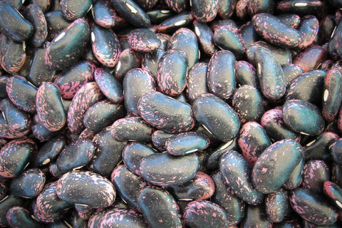 Scarlet Runner, a large purple and black bean - Rancho Gordo, Heirloom beans