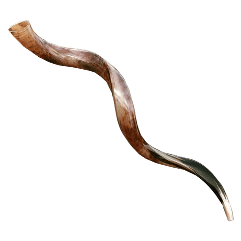 Large Yemenite Half-Polished Shofar 39-41""
