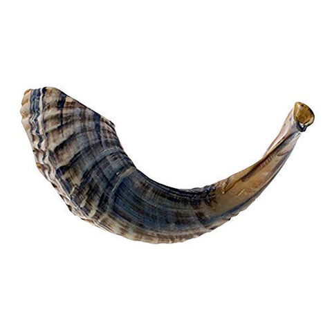 "12""-14"" Natural Shofar 