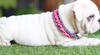 Decorative Dog Collar (DIY)