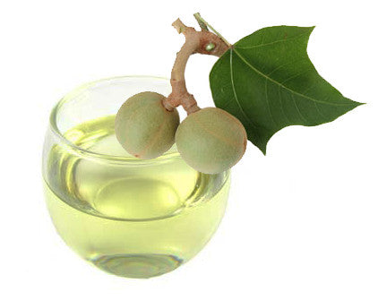 100% Pure Organic Kukui Nut Oil | Imported From Hawaii