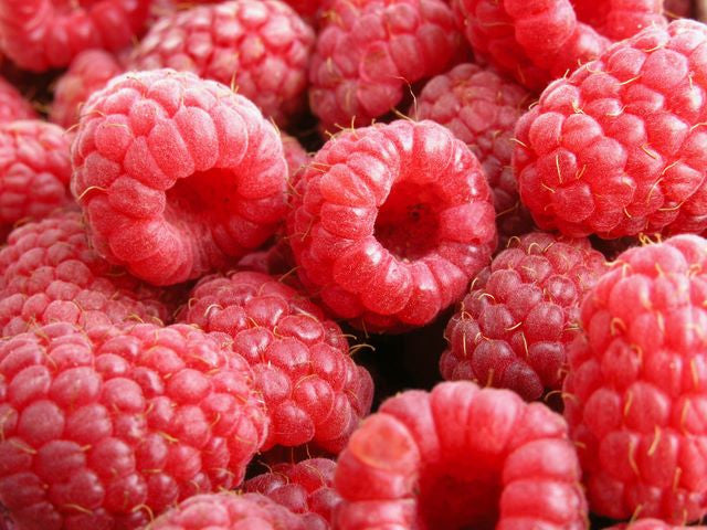 100 Pure Organic Red Raspberry Seed Oil Unrefined