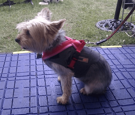 Xtra Dog Fleece Walking Harness