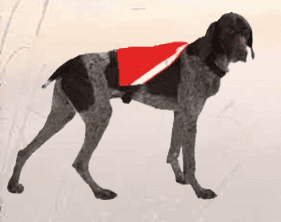 Visi-Vest - Dog Reflective Clothing