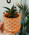 Mini Succulent & Terracotta Pot
