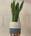 White Terracotta Plant Pot - 14cm