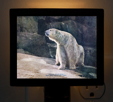 Polar Bear - New York Zoo Night Light - That Fabled Shore Home Decor
