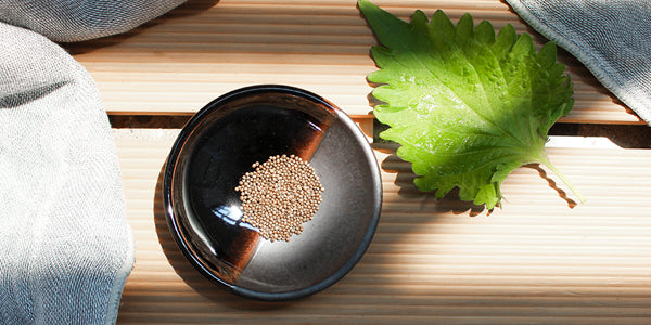 Japanese Skin Care Ingredients, Japanese Skincare Ingredients, Shiso Oil, Amayori