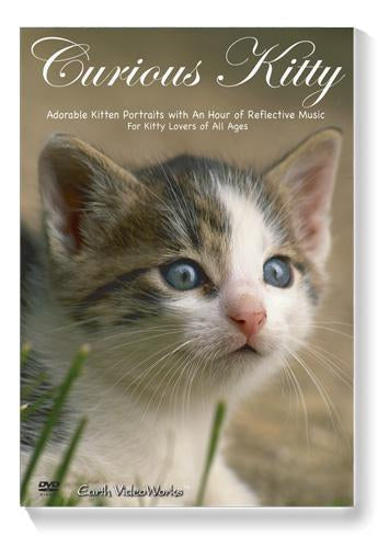 Curious Kitty Ambient DVD