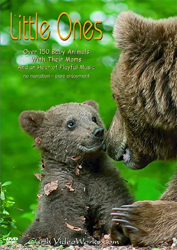 Little Ones Ambient DVD