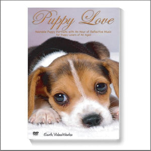 Puppy Love Ambient DVD