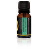 Essential Oil Eucalyptus Radiata