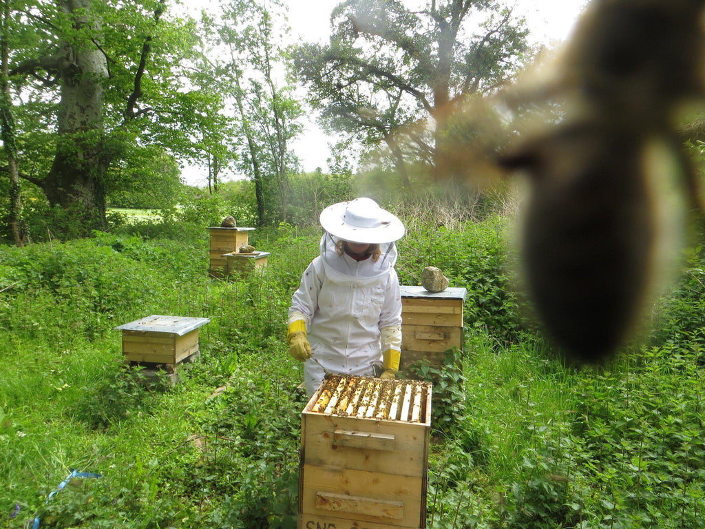 Summer Update and Invitation to the Honey Celebration 2015 Newsletter-Brookfield Farm