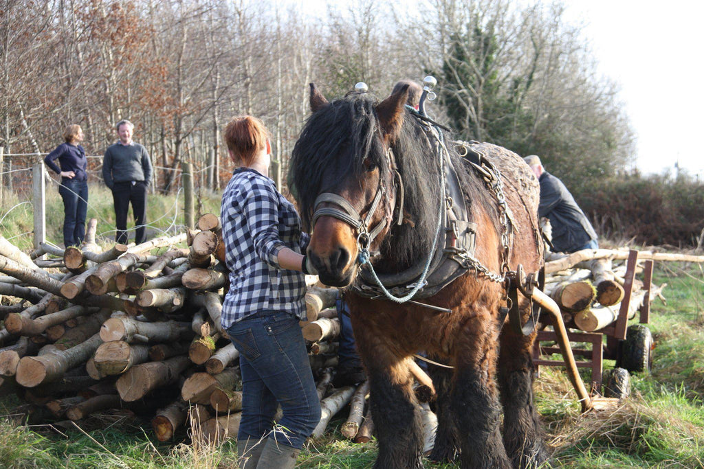 Horse Logging at Brookfield Farm-Brookfield Farm
