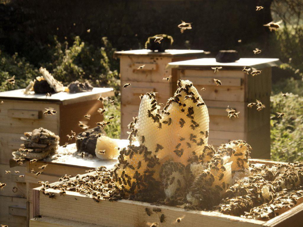 Honey Celebration! 12 September 2015-Brookfield Farm