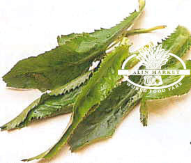 Culantro/Ngo Gai/Sawtooth Leaves
