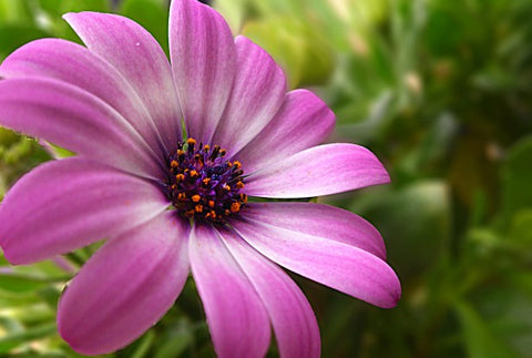 purple flower