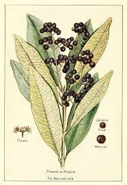 Allspice Berries | Pimento, Jamaica Pepper | Money, Luck, Healing, Peaceful Mind