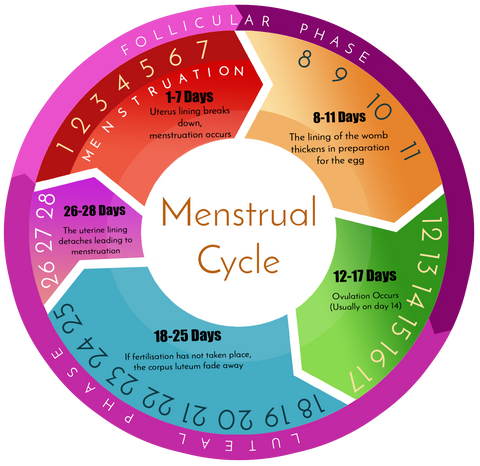 What is Menstruation: How Does The Menstrual Cycle Work? – Anigan
