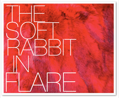THE SOFT RABBIT IN FLARE